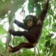 hangend aapje, schouder cursus illustratie